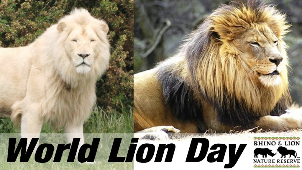 Image result for world lion day images