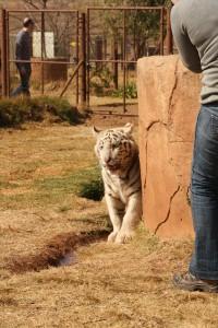 08-animal-creche-rhino-lion-nature-reserve