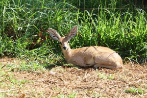 10-animal-creche-rhino-lion-nature-reserve