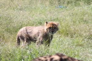 12-animal-creche-rhino-lion-nature-reserve