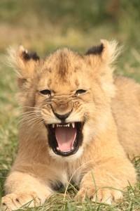 26-animal-creche-rhino-lion-nature-reserve