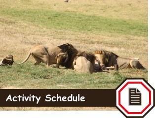 activity-schedule-rhino-lion-button