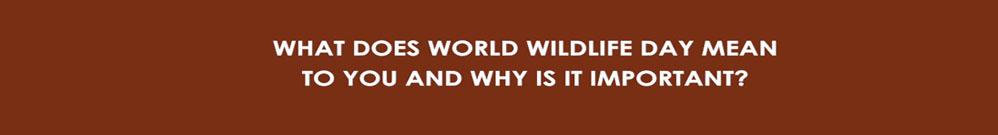 World Wildlife Day Rhino & Lion Nature Reserve