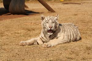07-animal-creche-rhino-lion-nature-reserve