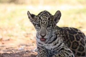 15-animal-creche-rhino-lion-nature-reserve