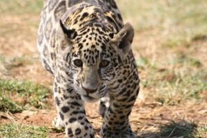 16-animal-creche-rhino-lion-nature-reserve