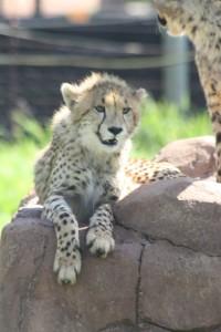 17-animal-creche-rhino-lion-nature-reserve