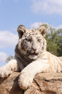 18-animal-creche-rhino-lion-nature-reserve