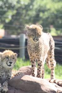 19-animal-creche-rhino-lion-nature-reserve