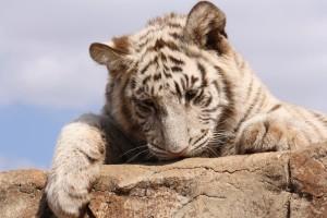 20-animal-creche-rhino-lion-nature-reserve