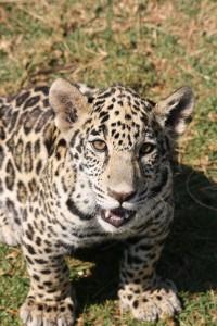 22-animal-creche-rhino-lion-nature-reserve