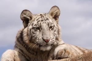24-animal-creche-rhino-lion-nature-reserve
