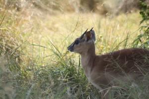 25-animal-creche-rhino-lion-nature-reserve