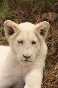 29-animal-creche-rhino-lion-nature-reserve